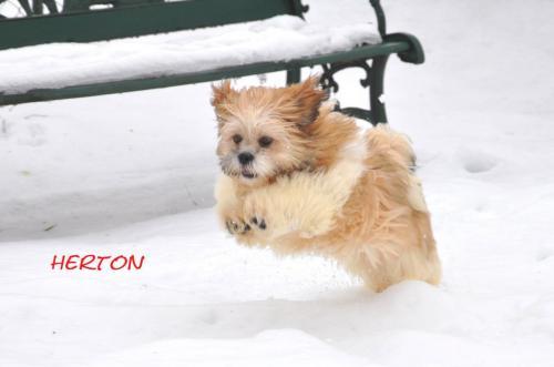 herton,a la neige