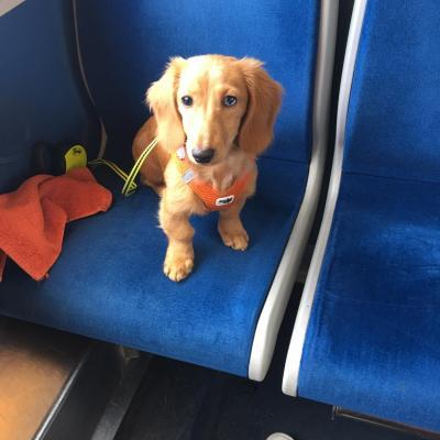 Marly en train