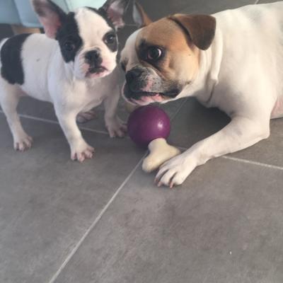 Nala et sa nouvelle grande soeur